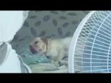 Владельцам зсобак на заметку в жаркую погоду