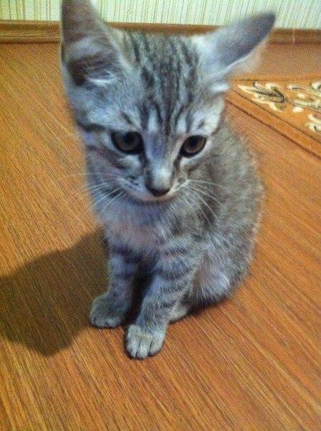 SOS!!!Сегодня на пр.Текстильщиков найден котенок,мальчик,на вид 2-3 ме