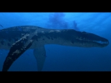 Прогулки с динозаврамиWalking With Dinosaurs 3 серия (Озвучка Николая Дроздова)