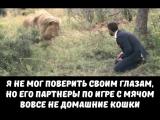 Шок!!! Играет со львами