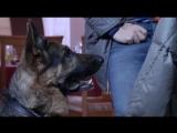 Т/С Лорд Пёс - полицейский 14 серия 2013г