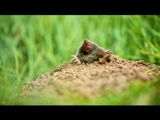Как бороться с кротами на огороде