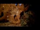 Это чистильщик в аквариуме