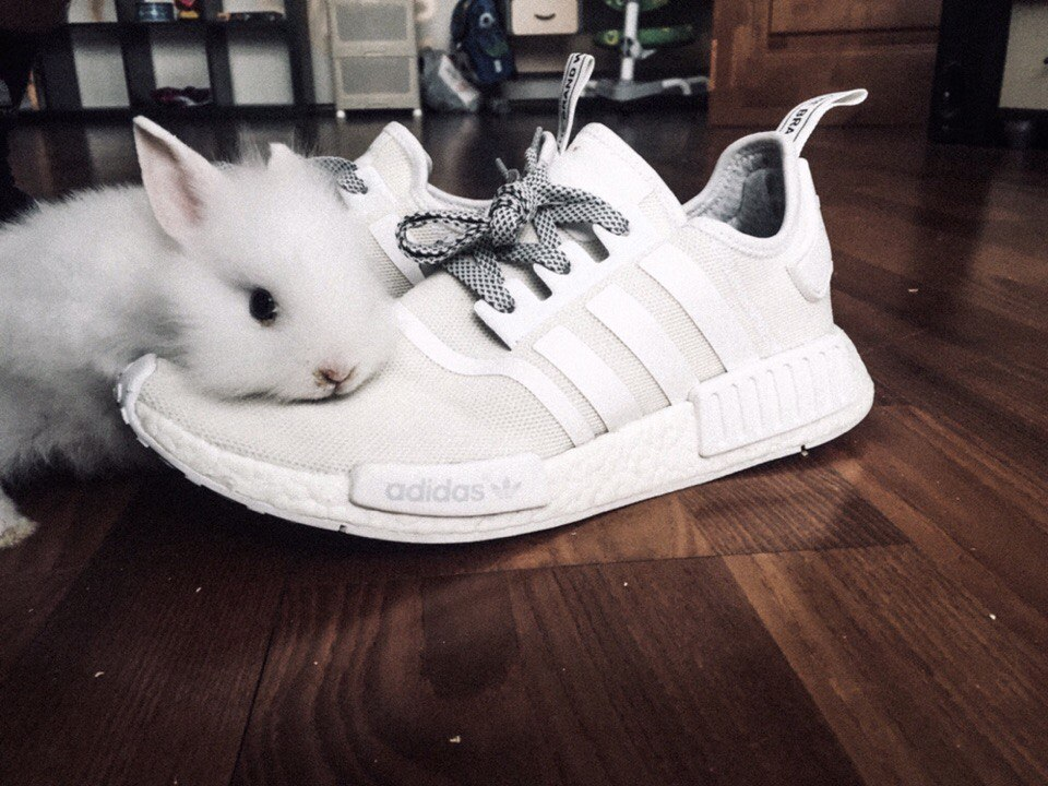 Кролик и белоснежные кроссовки после средства для чистки Solemate