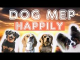 DOG MEP ~ HAPPILY~ (VIC~DADDY~XENA~GINA)