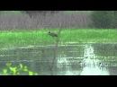 1. Весенний прилёт птиц. Хайку