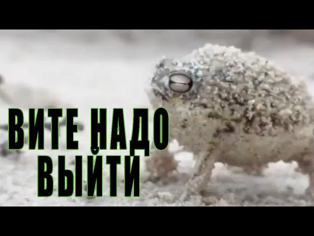 MADEVIL - Вите надо выйти (Кавер с животными) |MMV 101