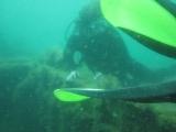 Погружение с аквалангом у затонувшего корабля.