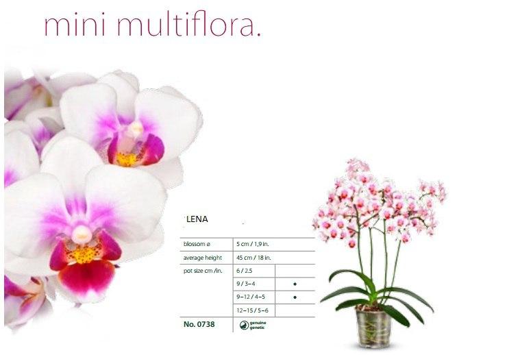 Орхидеи тюмень в контакте