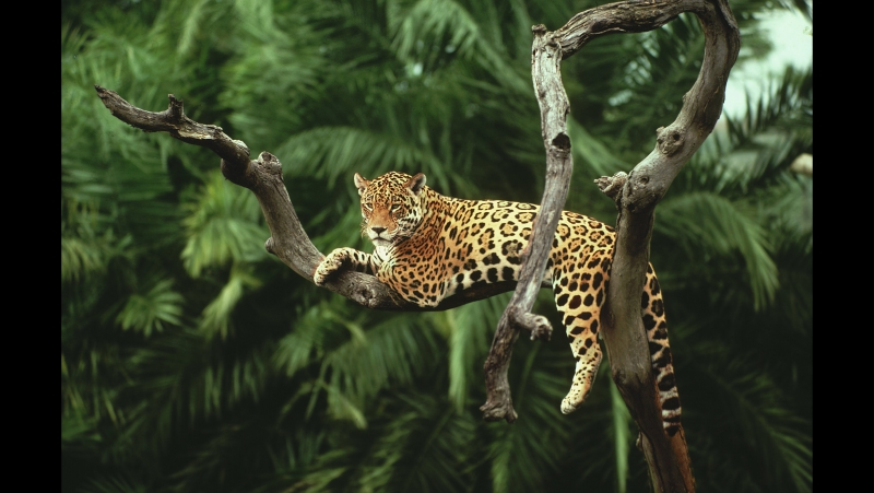 Амазонка. Колыбель жизни. Дикий мир. Документальный фильм National Geographic