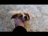Собачка ищет дом!!! Посмотрите на это чудо-расчудесное!! г. Иваново!