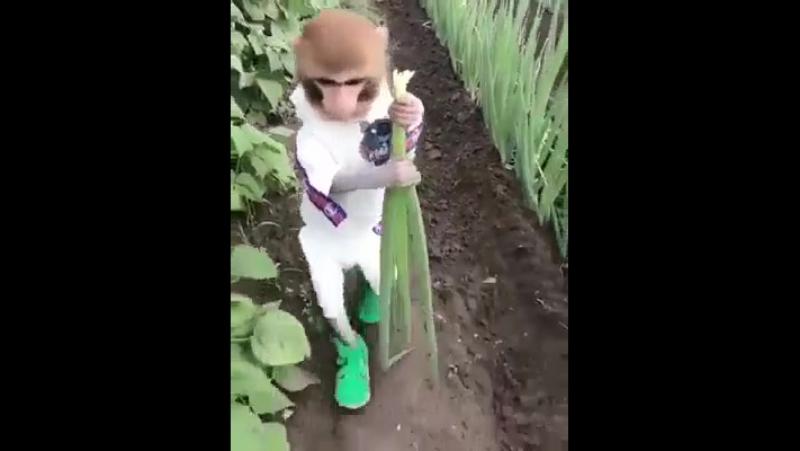 В Российской деревне вырос. Про бананы знать не знает))