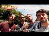ИспаноКубаноМания: ANIMALEANDO и Willie Key - 8 июля в клубе RED