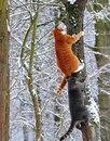 - Рыжик, поднажми, там медведь вообще-то внизу!