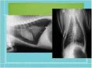 Вебинар Hill's Рентгенография грудной клетки МДЖ часть 2