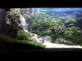 MITRA aqua scape. JL Bala Dewa no 09 Bdg