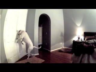 Видео скрытой камеры в спальне
