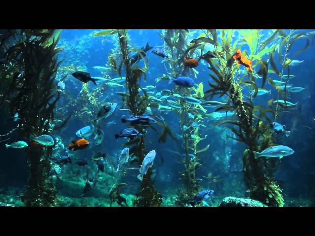 3 HOURS of Relaxing Aquarium Fish Coral Reef Fish Tank Relax Music 1080p HD