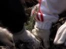 В пригороде Йошкар-Олы высажена аллея елей и берез