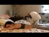 мне срочно нужен этот кот! или его сенсей для обучения моих...