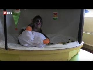 Детеныш приматов мандрилов