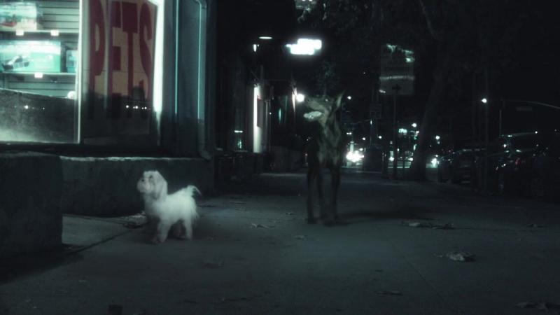 Peking Duk - Stranger ft. Elliphant » Freewka.com - Смотреть онлайн в хорощем качестве