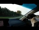 Самый настоящий щенячий восторг
