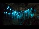 Удивительная пещера светлячков в Новой Зеландии