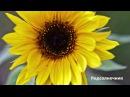29. Фрукты и другие культурные растения. Часть 2