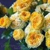 "Цветочная лавка ""NEW FLOWERS &COFFEE"""
