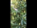 Такой интересный цветочек растёт в Адлере