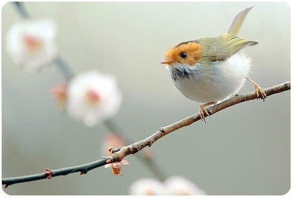 Если в твоей душе осталась хоть одна цветущая ветвь, на неё всегда сяд