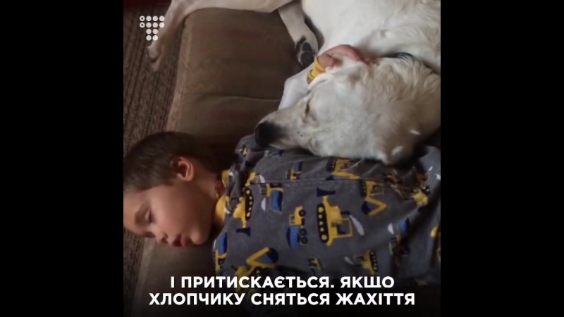 Пес Лего допомагає своєму другові-хлопчику з аутизмом заснути та подолати нічні жахіття