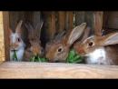 Кролики 🐰🥕