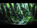 Flow by Yoda - 1st place 45x30x30 cm nanoscape 2015
