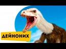 Динозавры для детей Дейноних Про динозавров детям Познавательное видео для детей