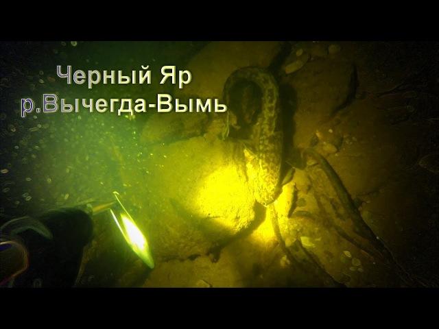 Другой мир, Черный Яр. Река Вычегда подводная охота.