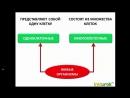 биология 5 класс Строение клетки. Ткани