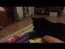 Кот приносит мячик