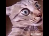 Кот кружит в танце.перепуганный кот