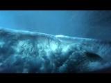 11 восхитительных сцен в замедленной съемке из жизни океана