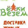 Живые новогодние елки с доставкой на дом в СПБ