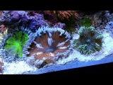 10 Gallon Rock Flower Anemone Tank