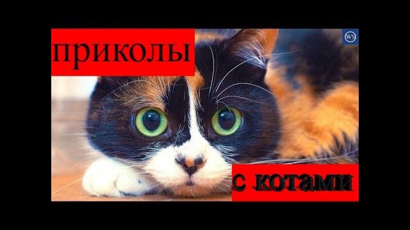 топ 10 приколов с котами Top 10 jokes with cats