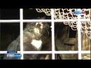 Вести - Алтай замурованные животные