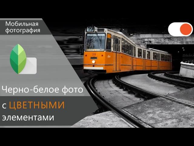 Как сделать черно белое фото с ЦВЕТНЫМ объектом в Snapseed Уроки мобильной фотографии