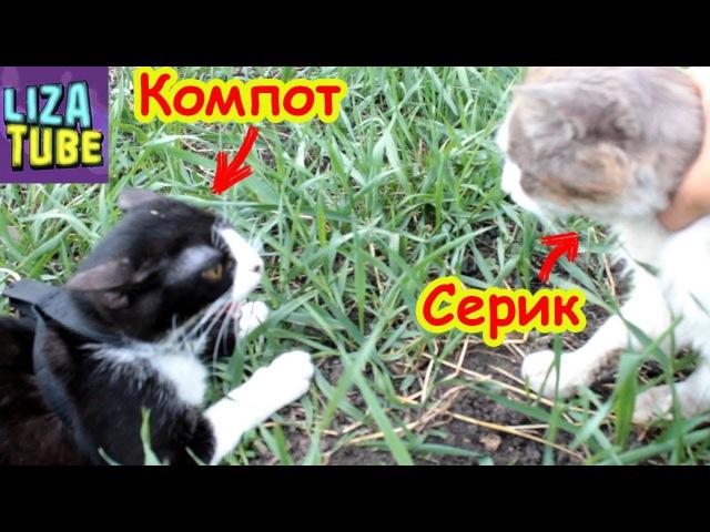Компот сошел с ума шипит на Серика Коржик очень серьёзный кот Лиза и котики ❀ LizaTube
