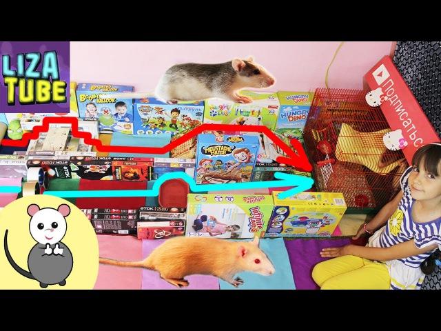 Белочка Звездочка и Новая полоса препятствий Лиза и крыски 🌸 LizaTube