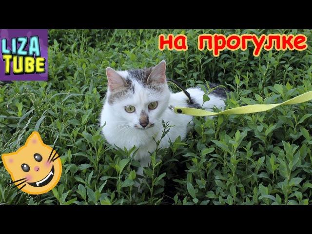 Карамелька на прогулке ЦЕЛУЕТСЯ с Сериком Лиза и котики 🌸 LizaTube