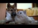 Смешные животные видео смотреть онлайн бесплатно до слез. Прикольные животные в...